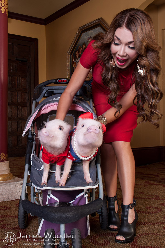 America's Most Fashionable Piglets