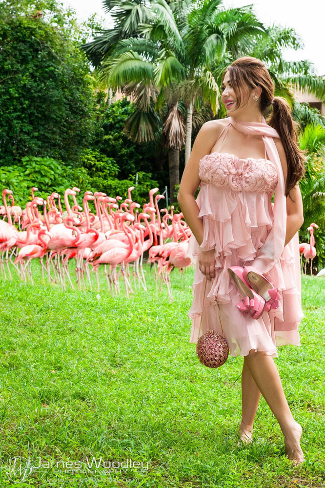 Animal Instincts with Jungle Island | October 2015